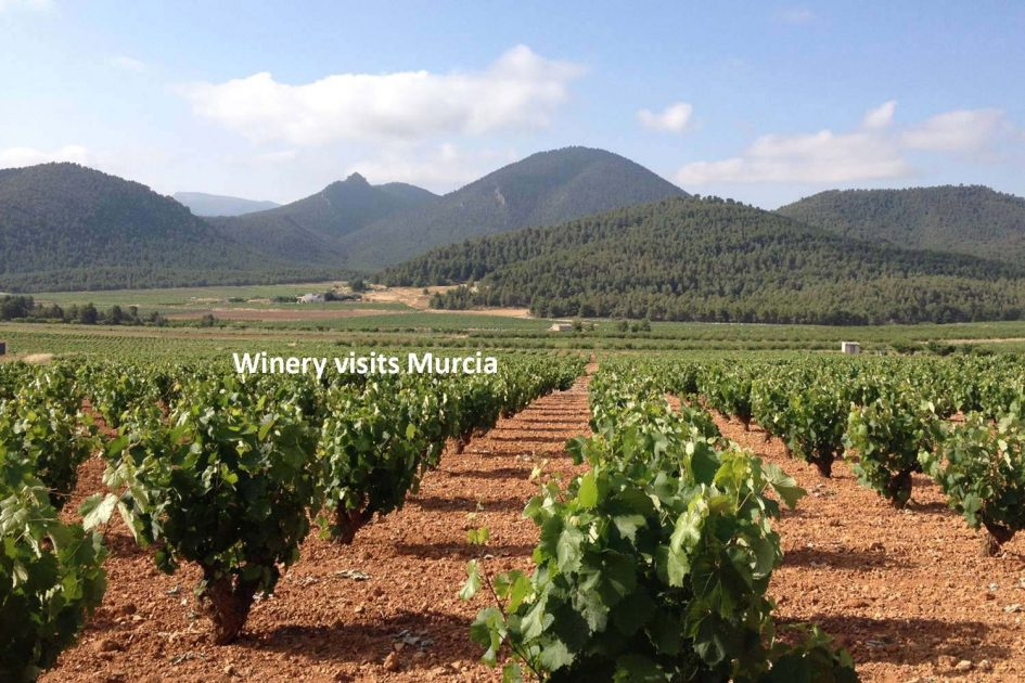 murcia-winery-visits2