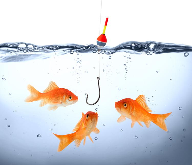 goldfish in danger - concept deception